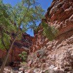 hiking into grand canyon on the havasupai reservation