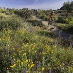 Sonoran Desert Mountain Biking with AOA