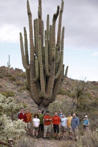 Giant saguaro cactus in the Sonoran Desert in Arizona