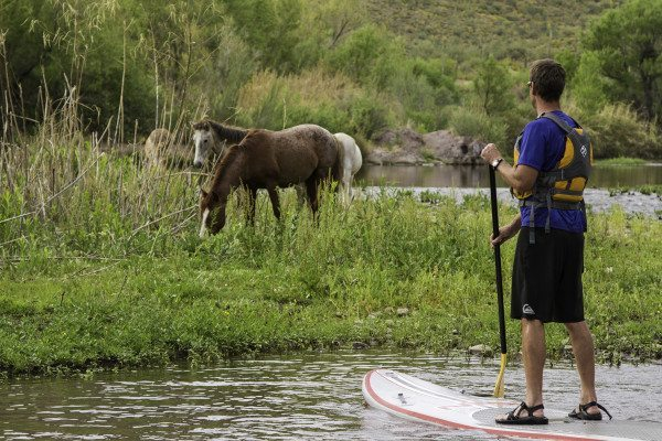 Guided Salt River Stand Up Paddle Board