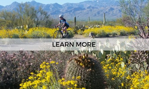 Learn more about a guided cycling trip in Southern Arizona with AOA