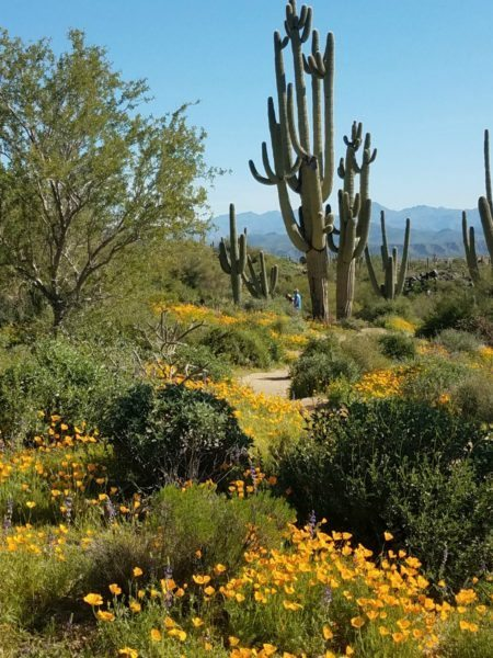 Wildflowers and cacti in the desert.