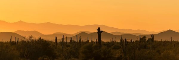 A landscape of the desert surrounded by a yellow sunlit sky.