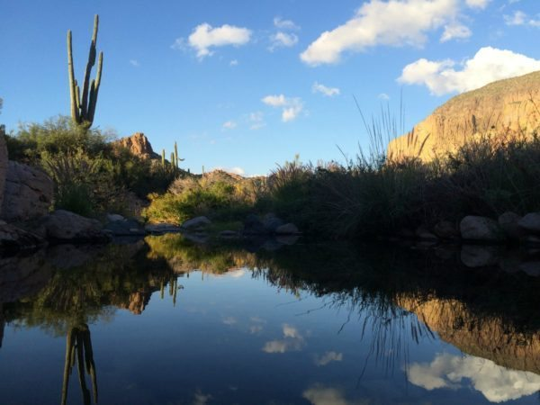 A pond in the Superstition Mountains.