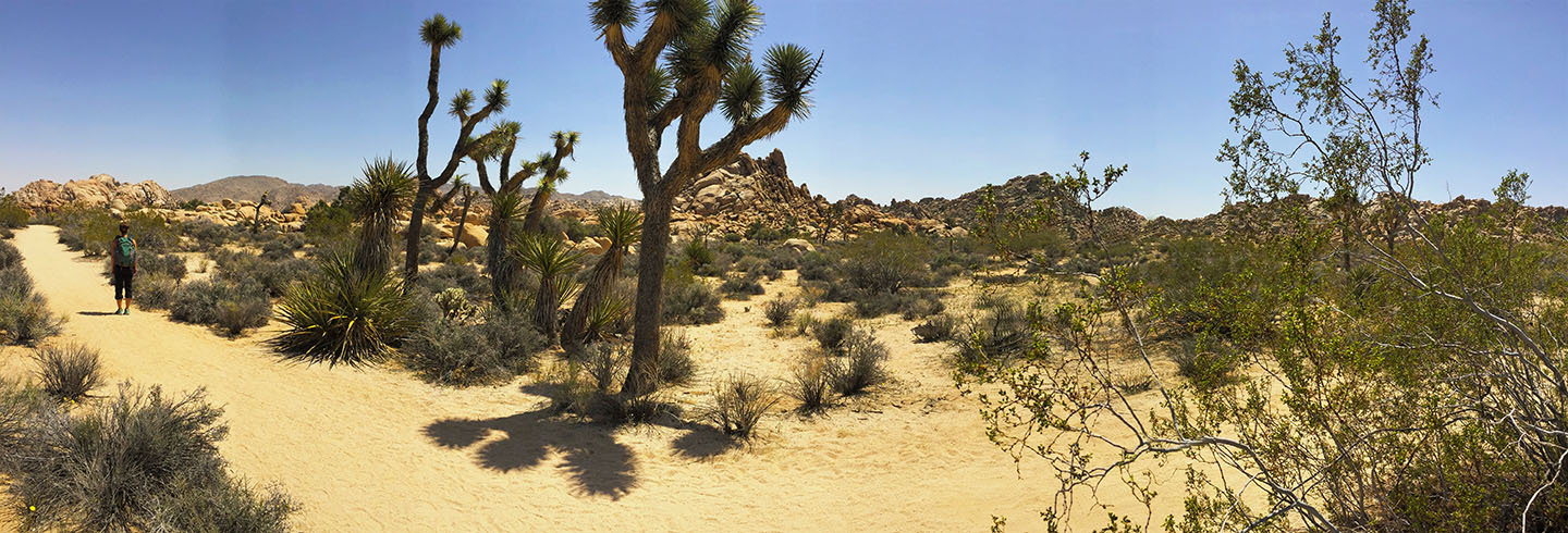go on a guided hiking and camping trip to Joshua Tree National Park with AOA
