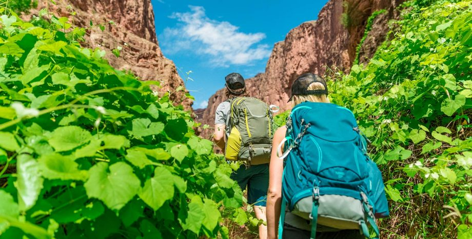 Hikers climb past green plant leaves on Havasu Falls trip