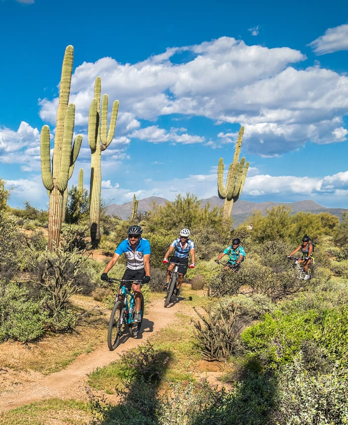 Mountain bike tour group rides past desert cacti