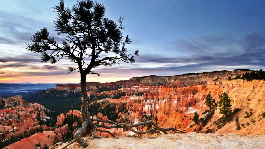 Cliffside tree overlooks Bryce Canyon National Park in Utah