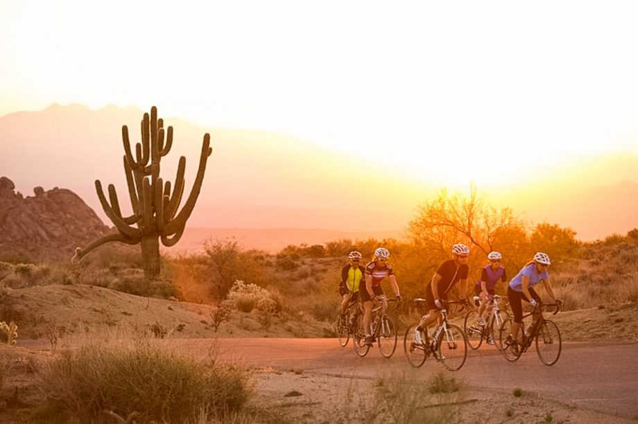 Road cyclist group bikes away from sunset-lit cactus