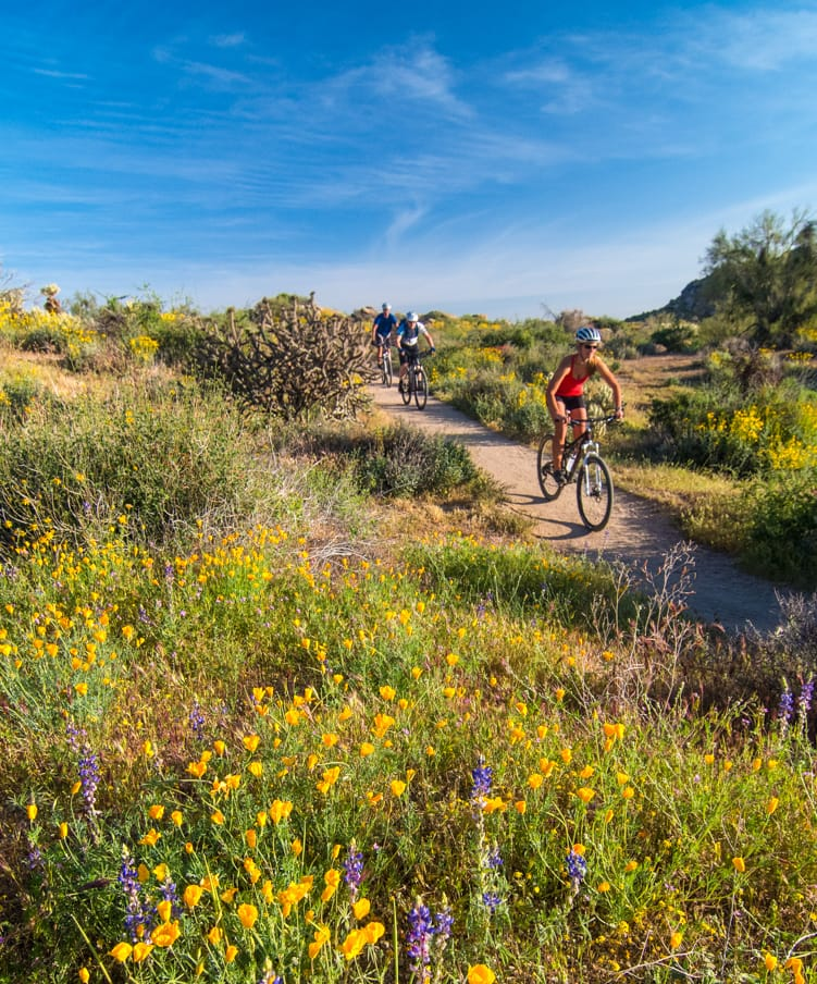 Mountain bikers pass yellow and purple flowers on tour