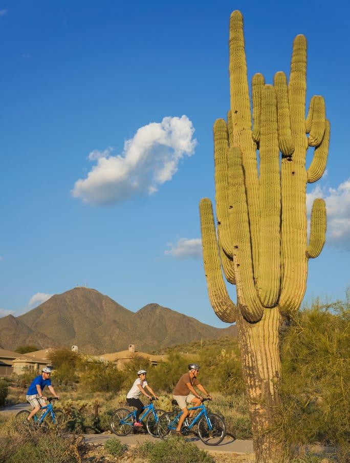 Cyclist under giant desert cactus on Arizona bike tour