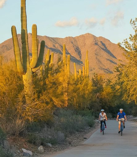 Cyclists ride past giant desert cactus on bike day tour
