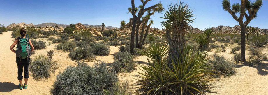 Hiker stands in desert on Joshua Tree hiking trip