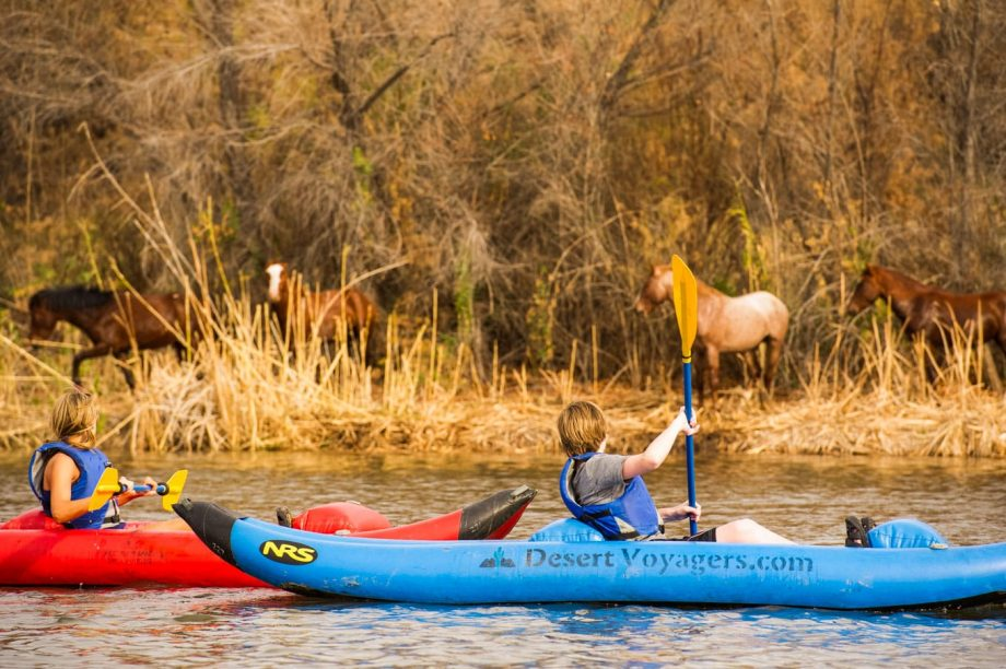 Kayakers paddle past horses on Lower Salt River tour