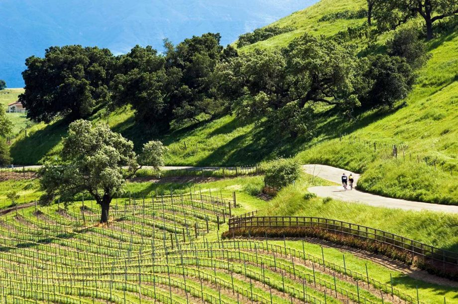 Cyclists pass vineyards on Napa road biking tour