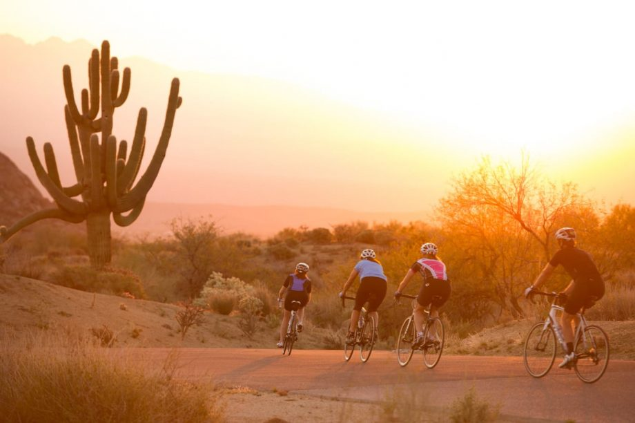 Road cyclists bike by giant desert cactus under Scottsdale sunset