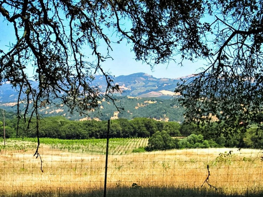 View of Sonoma vineyard on self-guided road biking tour