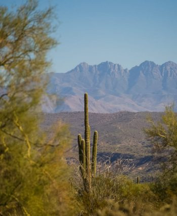 Lone Sonoran Desert cactus against mountain landscape