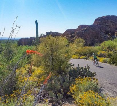Cyclist rides through desert cacti on Tucson road bike tour