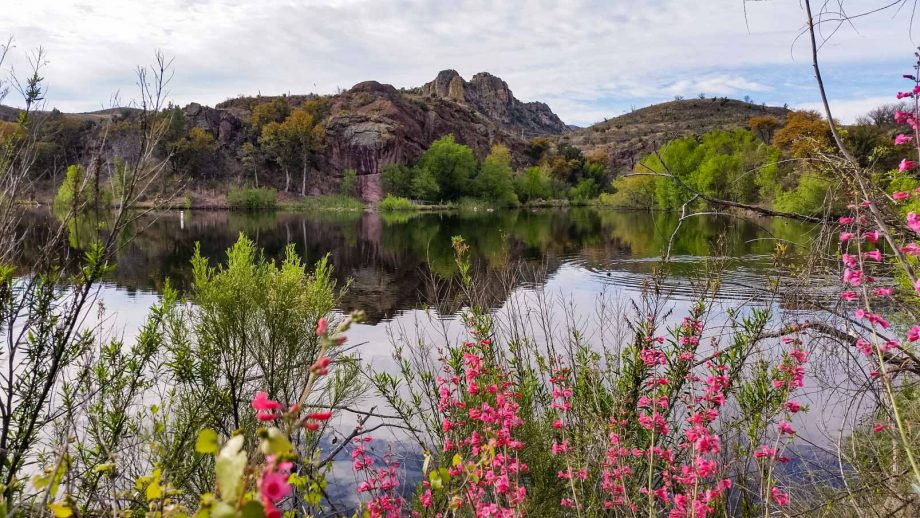 Pink flowers in front of pond on Tucson road bike tour
