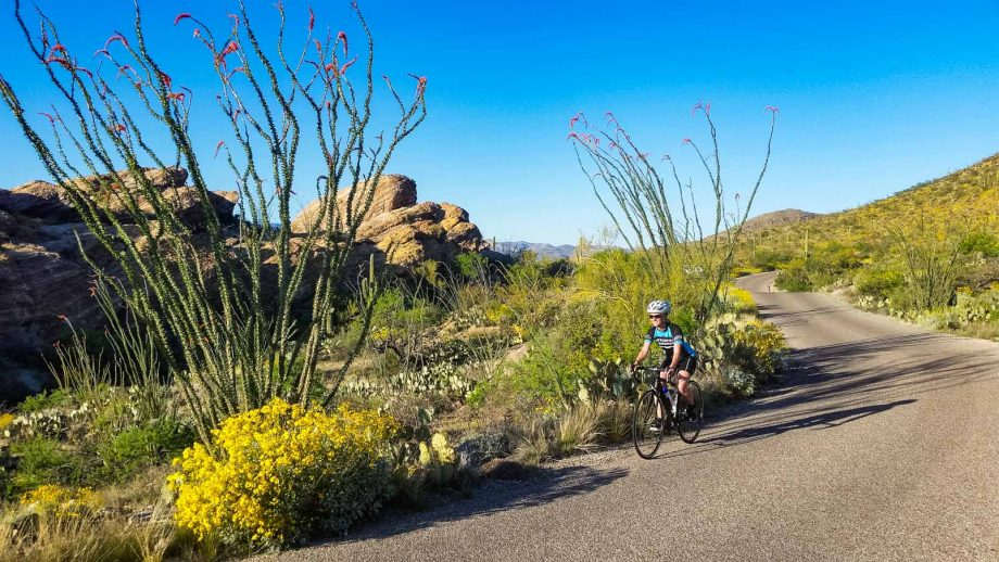 Cyclist passes desert plans on Tucson road bike tour