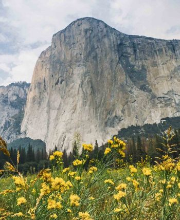 Field of yellow flowers on Yosemite National Park hiking tour