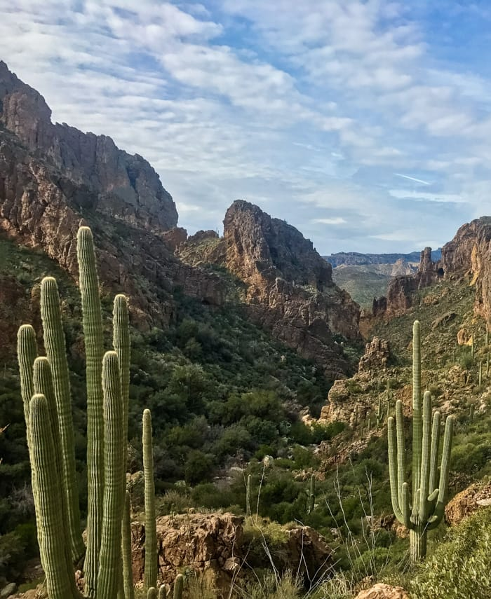 Cactus-filled valley in the Superstition Mountains Wilderness