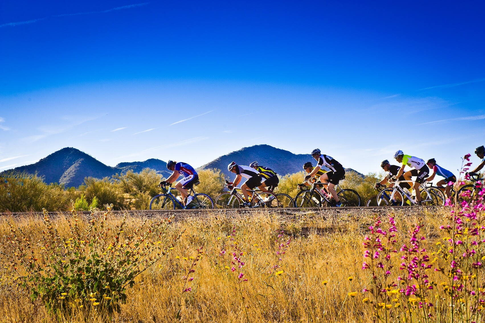 road cyclists on the tour de mesa in arizona