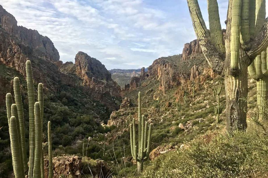 View of cacti in the Superstition Mountains