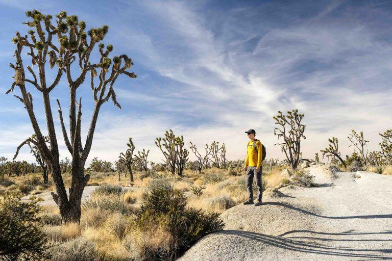 Male hiker among Joshua Trees along the Teutonia Peak Trail in the Mojave National Preserve.