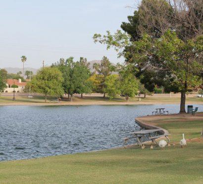 Ducks walking around a pond on the Greenbelt