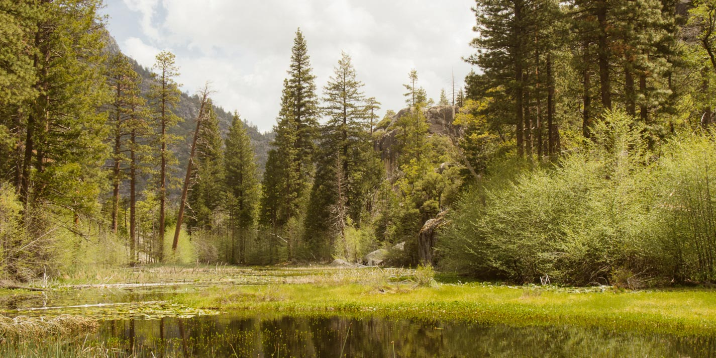 View of forest at Yosemite National Park.