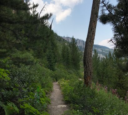 trail yellowstone national park