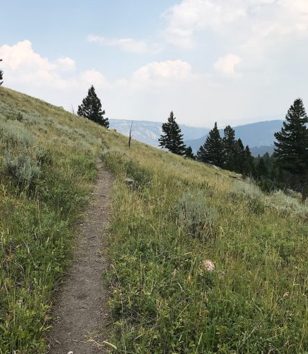 mount washburn trail yellowstone national park trail