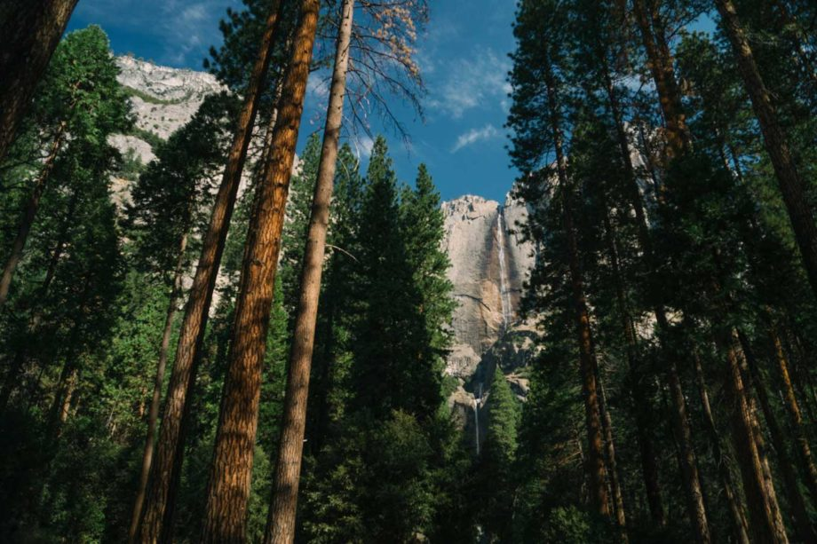 Yosemite National Park trees and view