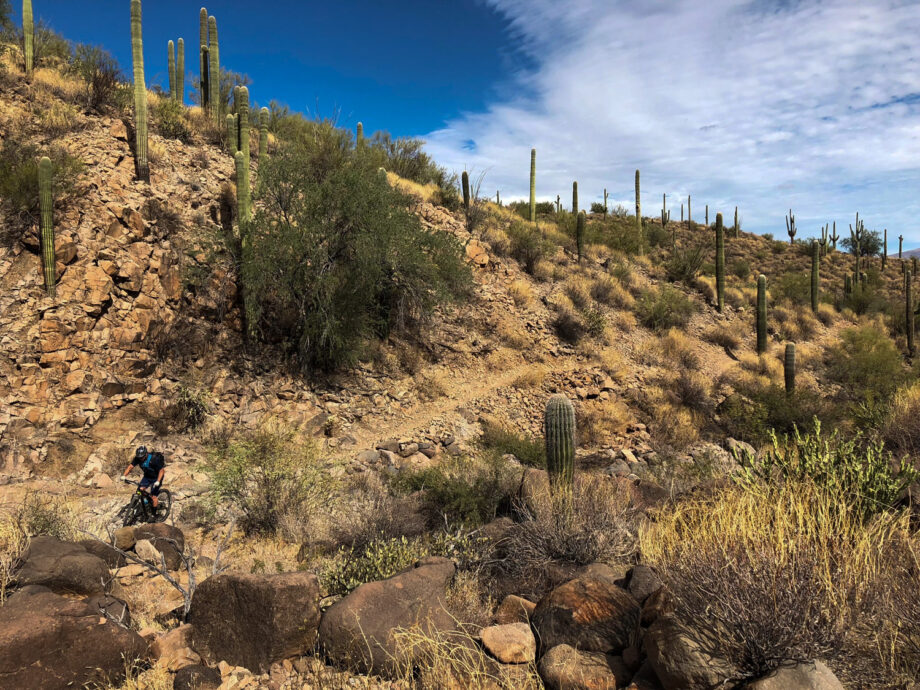 Mountain biker riding down a rocky descent with cactus along the trail