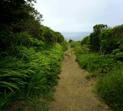 A trail passes between lush landscape at point reyes national seashore