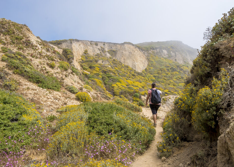 A hiker on trail in Point Reyes National Seashore